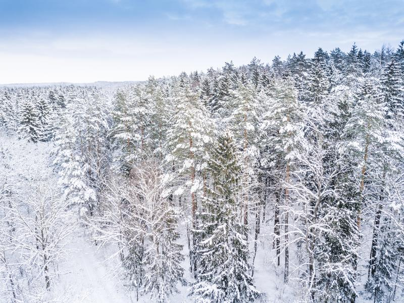 Lucht de winter bosmening Hommellandschap Witte bomen met sneeuwachtergrond Hoge moderne photogra stock foto