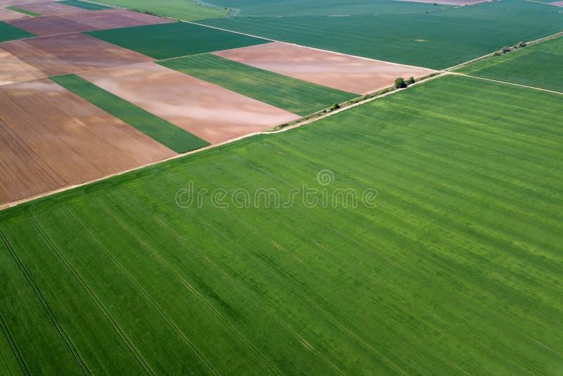 Lucht groen tarwegebied Luchtmenings groot groen gebied stock afbeeldingen