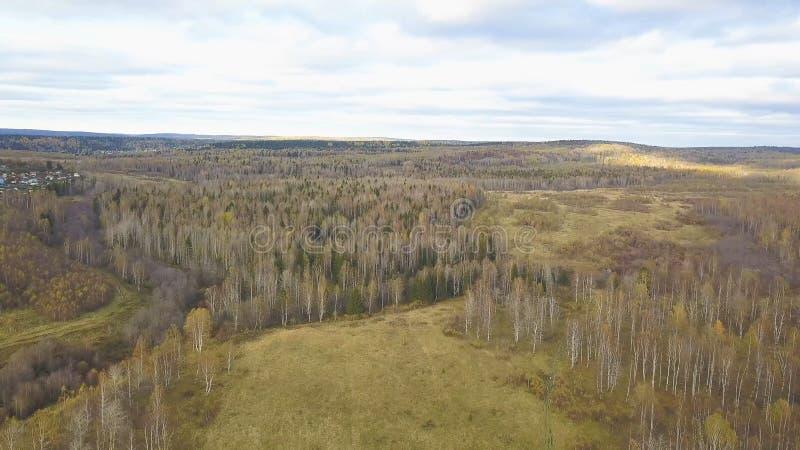 Lucht hoogste mening, de Herfstlandschap van wilde bosklem Hoge hoekmening van een wegtrog het de herfstbos stock fotografie