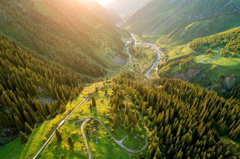 Lucht hoogste mening van de zomer groene bomen in bos met een schitterende bergrivier in Kazachstan stock foto's
