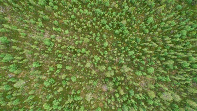 Lucht hoogste mening van mooie de zomer groene sparren in bos royalty-vrije stock fotografie