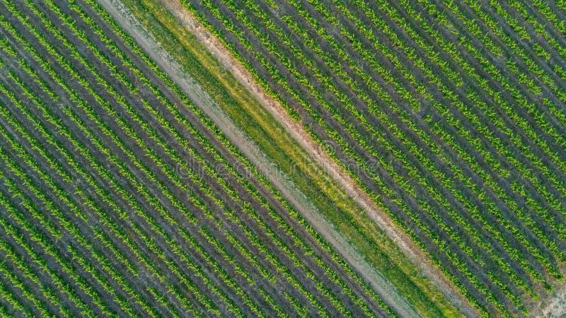 Lucht hoogste mening van wijngaardenlandschap van bovengenoemde achtergrond, Frankrijk stock afbeeldingen