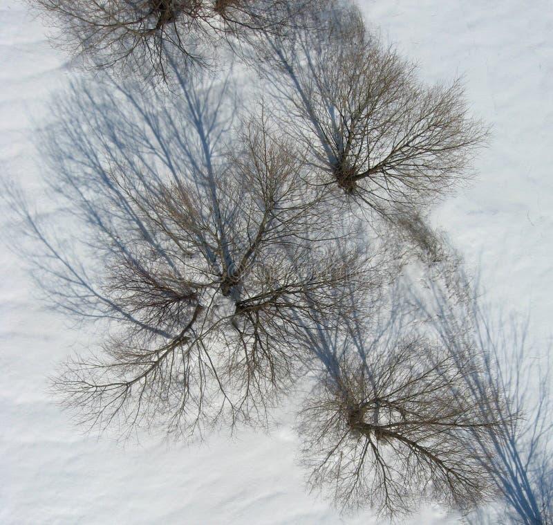 Lucht mening van bomen en schaduwen op sneeuw stock afbeelding