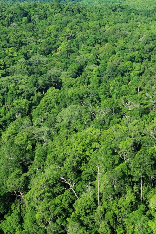Download Lucht mening van bos stock afbeelding. Afbeelding bestaande uit park - 54079997