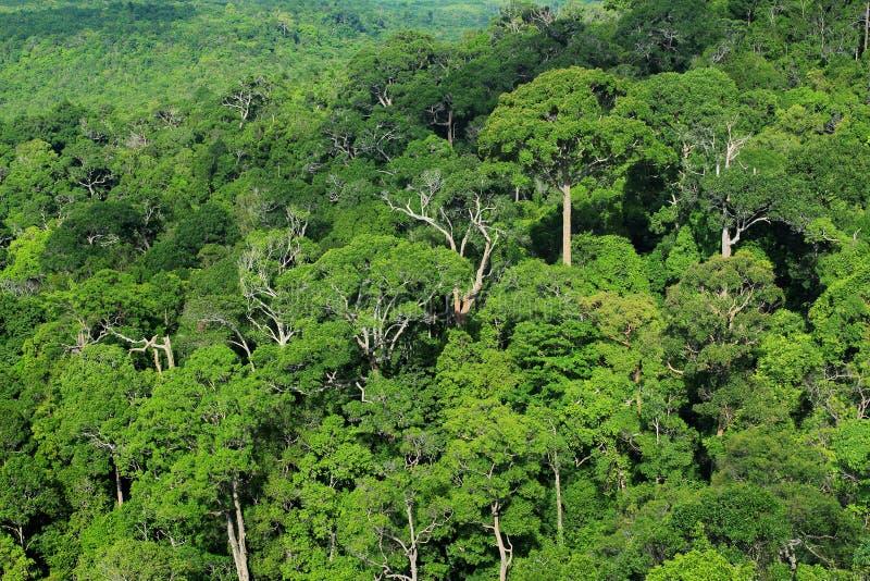 Download Lucht mening van bos stock foto. Afbeelding bestaande uit bovenkant - 54080004