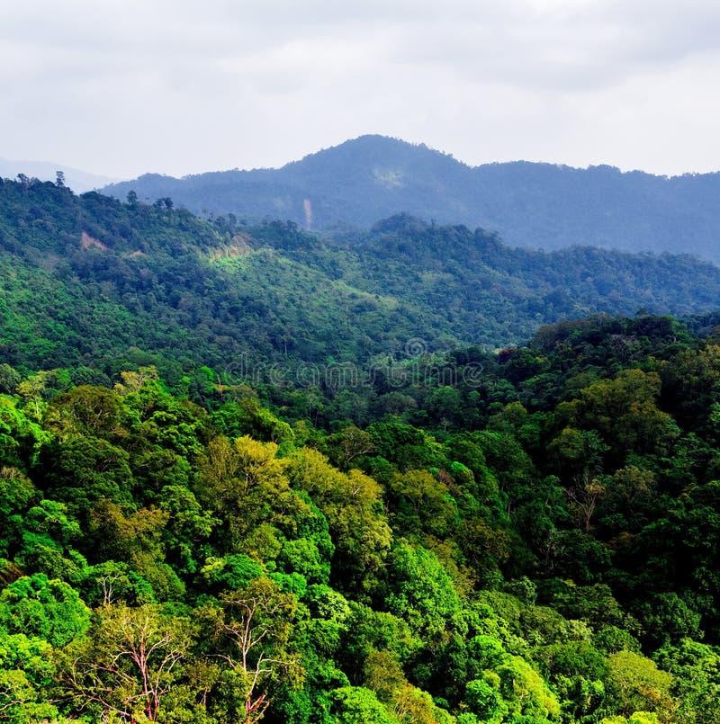 Lucht mening van bos stock foto