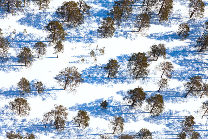 Bos in de winterdag, mening van hierboven royalty-vrije stock foto