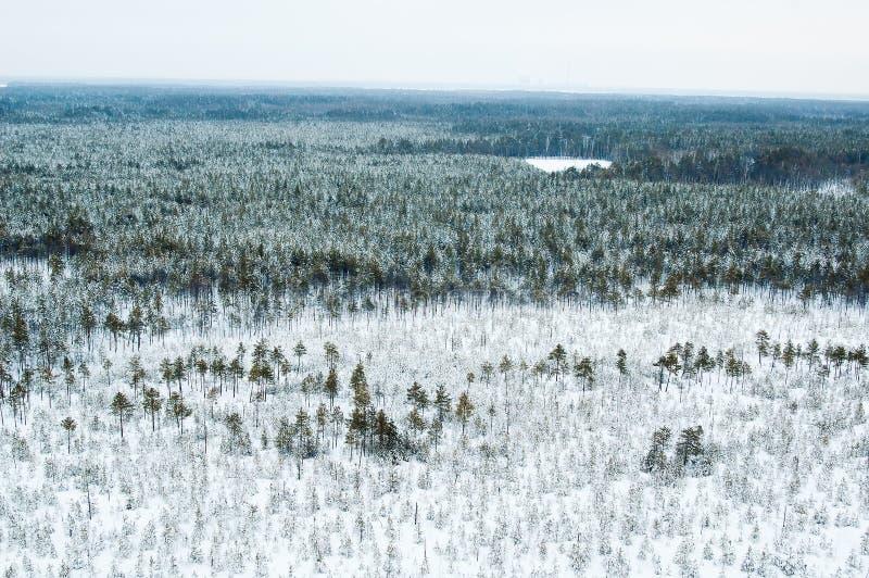 Lucht mening van de winterbos royalty-vrije stock afbeeldingen