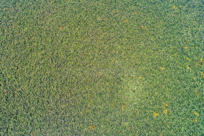 Luchtfoto van Palm Beachwater royalty-vrije stock afbeeldingen
