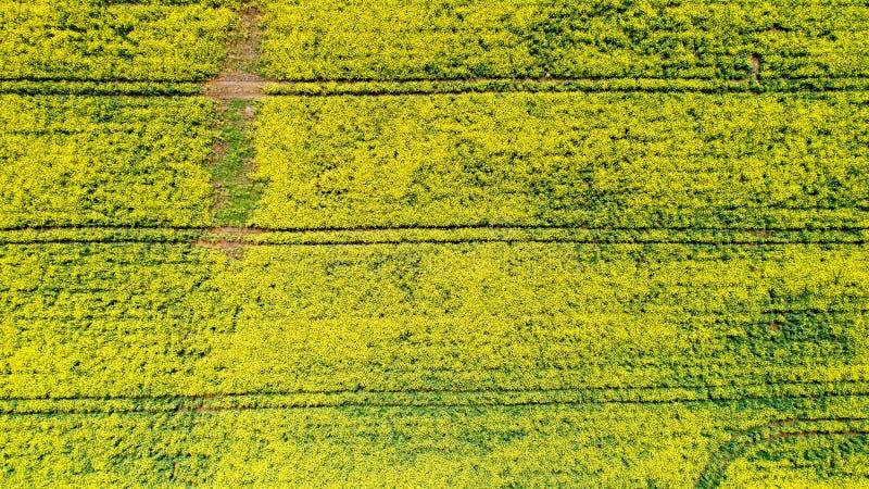 Luchtfoto van raapzaadbloemen, Frankrijk stock foto's
