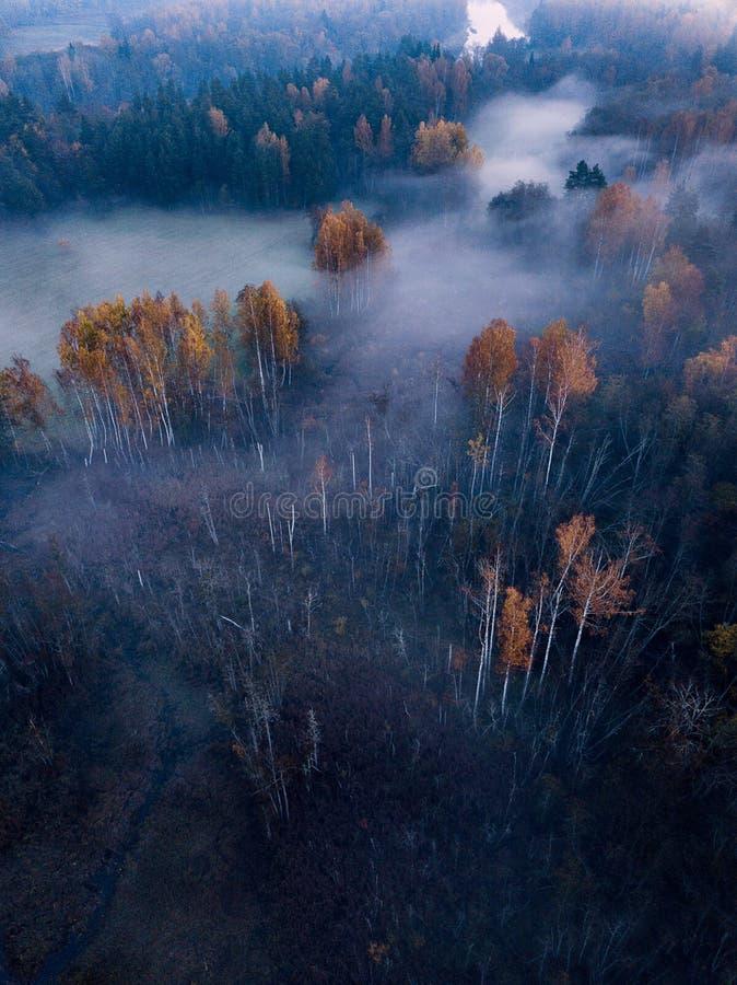 Luchtfotografie van een Bos in Mistig Autumn Morning stock afbeelding