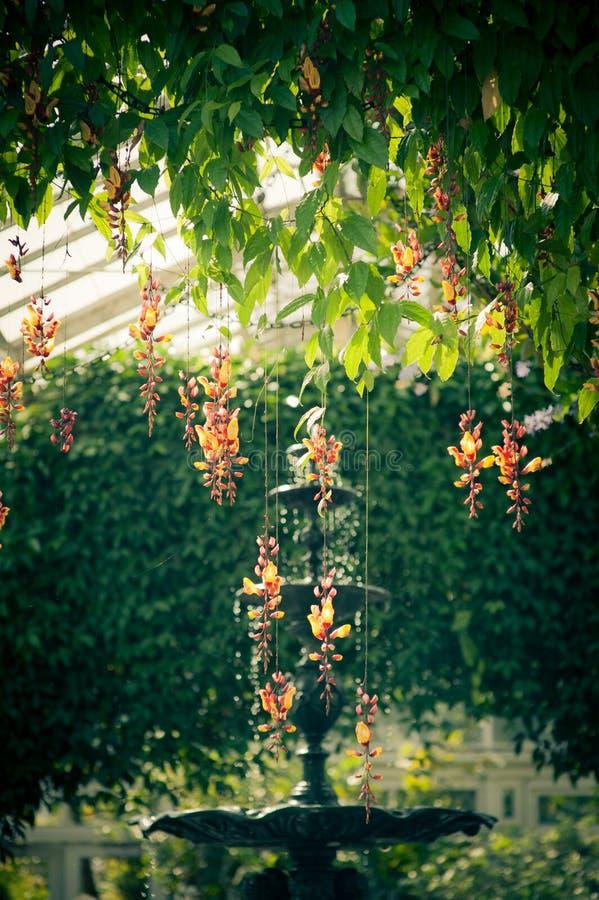 Luchtige orchideeënvertoning royalty-vrije stock foto