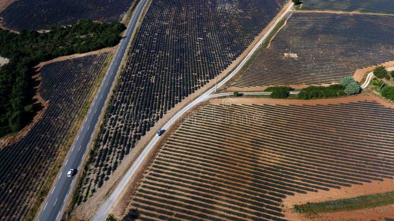 Luchtmening fromd rone over lavendelgebieden, de zomer stock foto's