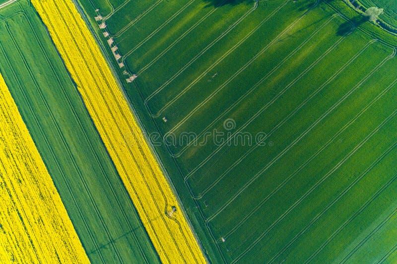 Luchtmening over koolzaadgebied stock afbeeldingen