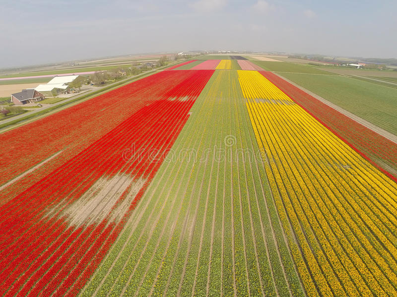 Luchtmening over tulpengebieden in Holland royalty-vrije stock foto's