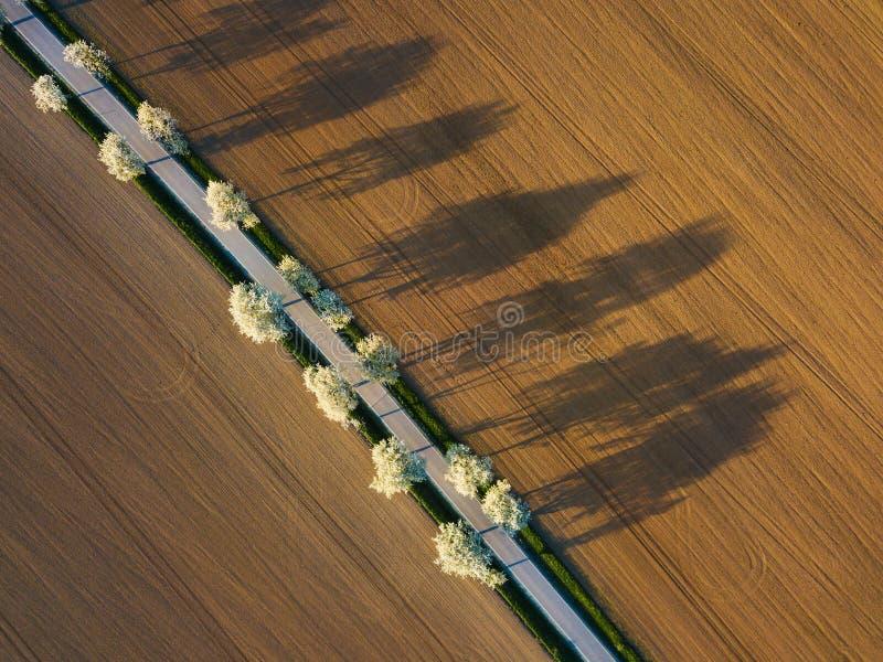 luchtmening van appelboomgaard Mooi openluchtplattelandslandschap van hommelmening Vele bloeiende appelbomen rond weg royalty-vrije stock foto