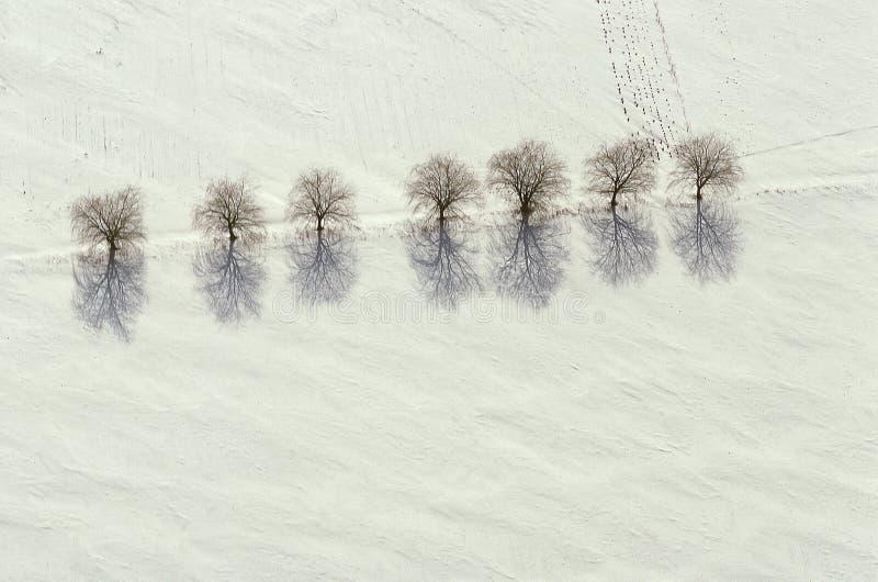 Luchtmening van bomen en schaduwen op sneeuw stock foto