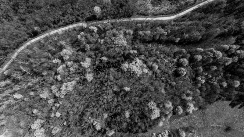 Luchtmening van bos met wilde kersen die in de lente wekken royalty-vrije stock foto's