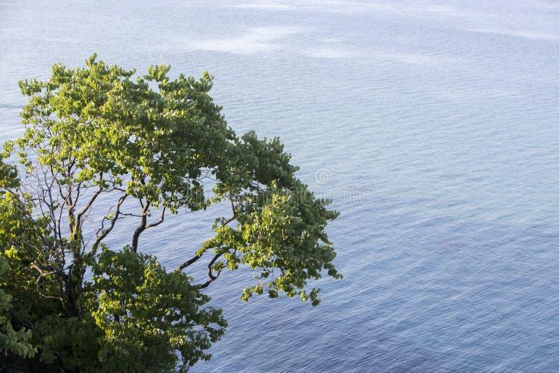 Luchtmening van een boom bij het mooie strand in Katerini, Griekenland stock foto's