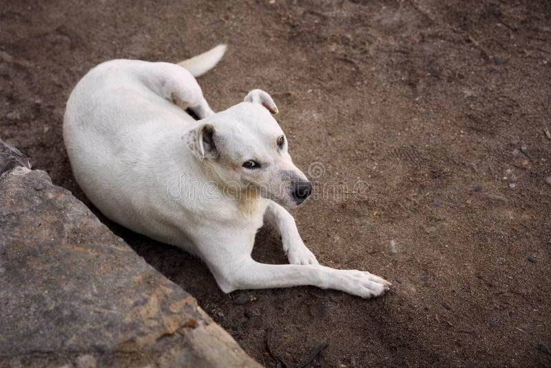 Luchtmening van een mooie witte verdwaalde hond stock afbeeldingen