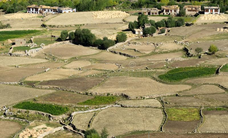 Luchtmening van groen ladakh landbouwlandschap royalty-vrije stock foto's
