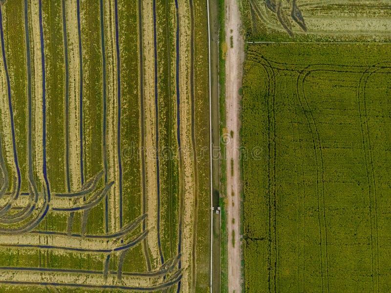 Luchtmening van groene die gebieden met rijst worden uitgestrooid, die tot een textuur voor een achtergrond leiden stock foto's