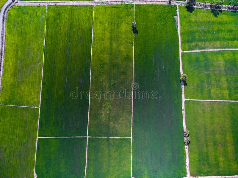 Luchtmening van groene rijstlandbouwbedrijven in Phichit, Thailand royalty-vrije stock fotografie