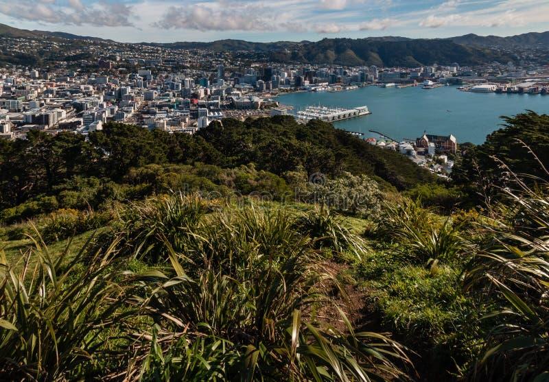 Luchtmening van het centrum en de haven van Wellington royalty-vrije stock fotografie