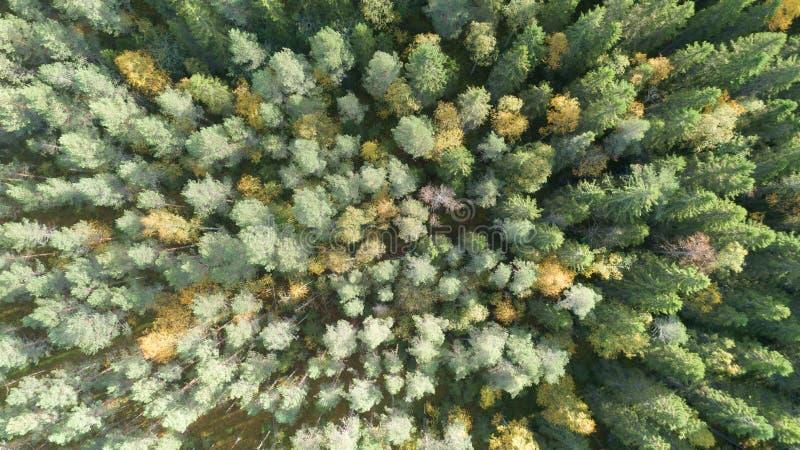Luchtmening van landschap van de de herfst het bosdaling met rode, gele en groene bomen Hommelfotografie royalty-vrije stock foto's