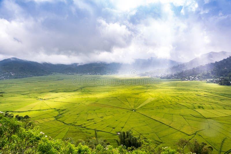 Luchtmening van Lingko-Spinnewebpadievelden terwijl Zonlicht het Doordringen door Wolken aan het Gebied royalty-vrije stock foto's