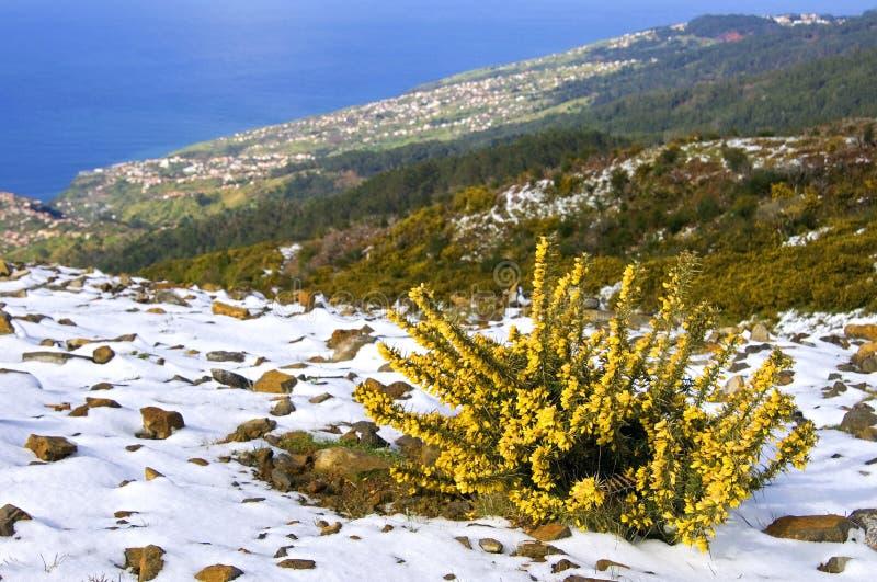Luchtmening van Madeiran kusttoevlucht en Oceaan royalty-vrije stock foto's