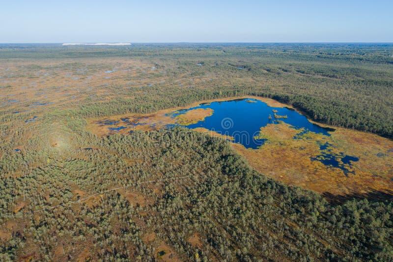 Luchtmening van Mooie meren in moerasland stock foto