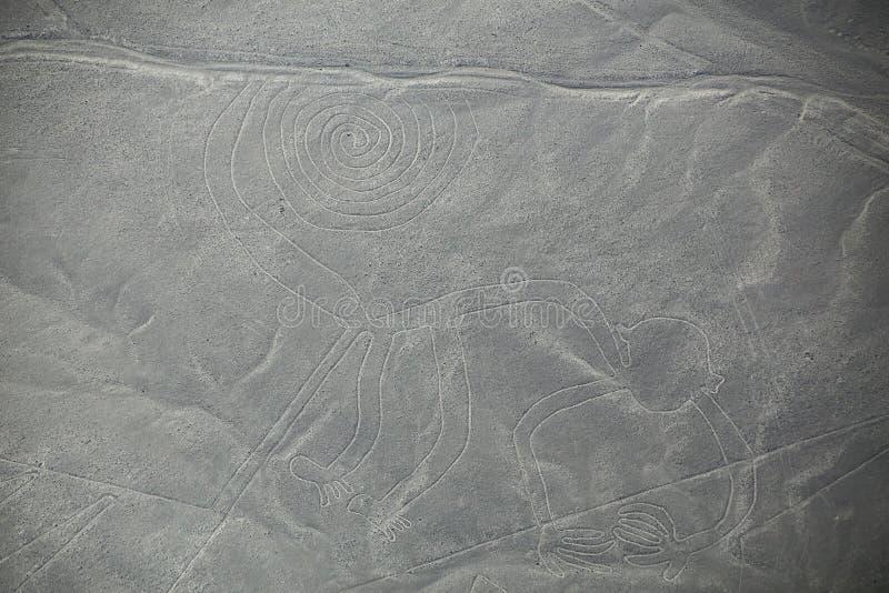 Luchtmening van Nazca-Lijnen - Aap geoglyph, Peru stock foto