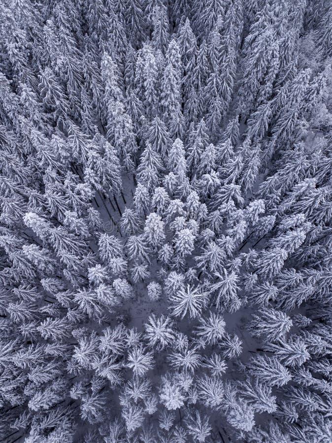 Luchtmening van sneeuw behandelde bomen in de wildernis royalty-vrije stock afbeeldingen