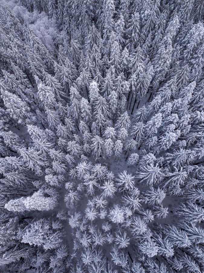Luchtmening van sneeuw behandelde bomen in de wildernis in de winter royalty-vrije stock afbeelding