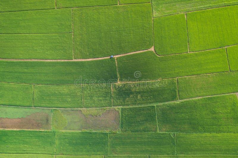 Luchtmening van Vliegende Hommel Mooi groen gebied van jonge ric royalty-vrije stock afbeeldingen