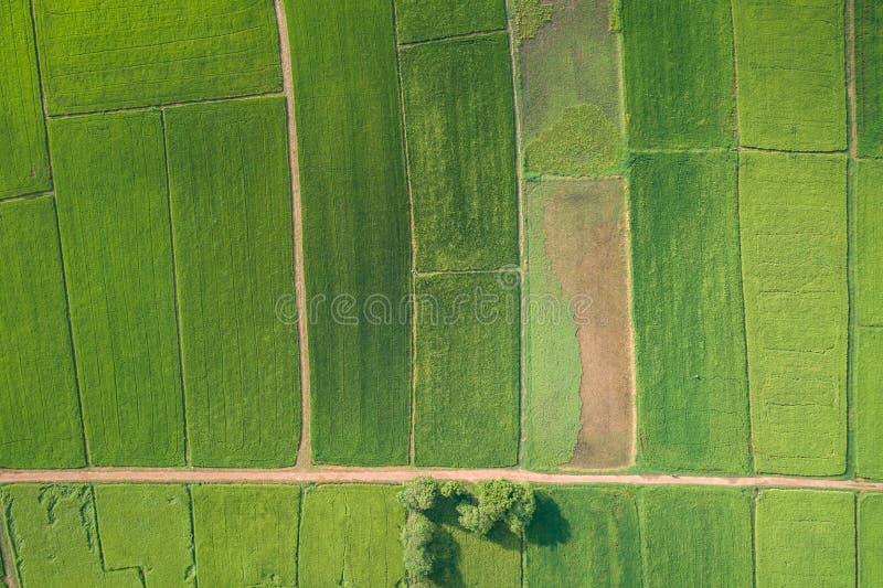 Luchtmening van Vliegende Hommel Mooi groen gebied van jonge ric stock foto