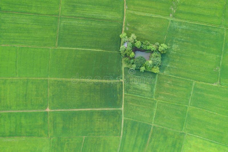 Luchtmening van Vliegende Hommel Mooi groen gebied van jonge ric royalty-vrije stock afbeelding