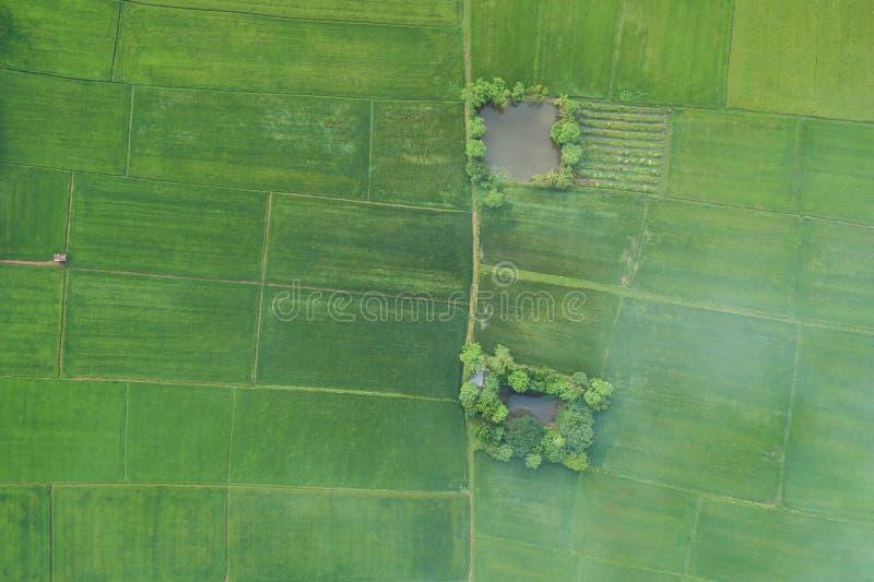 Luchtmening van Vliegende Hommel Mooi groen gebied van jonge ric stock foto's
