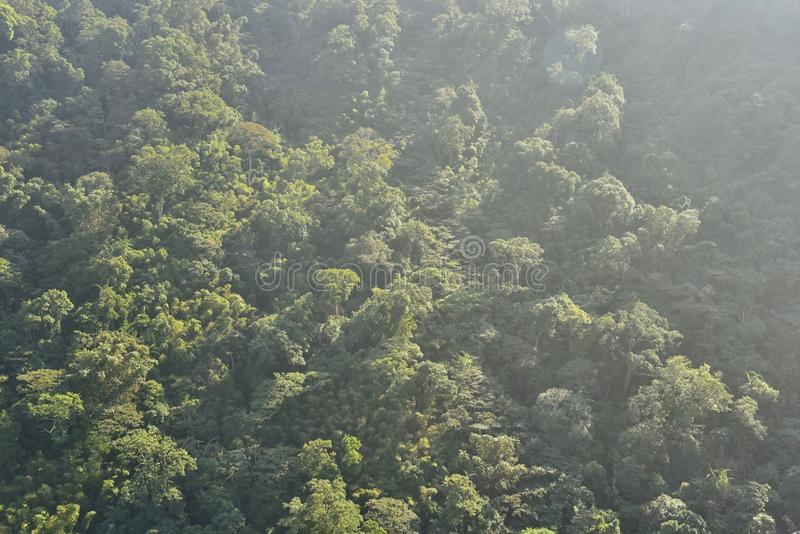 Luchtmening van Weelderig Groen Bos op Berg royalty-vrije stock afbeelding