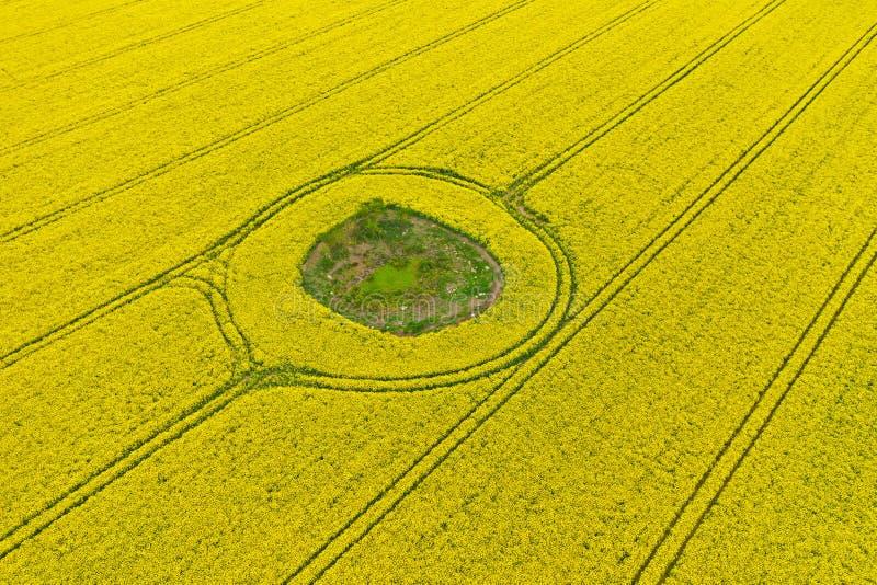 Luchtperspectiefmening over geel gebied van bloeiend raapzaad met grondvlek in de midden en tractorsporen stock foto's