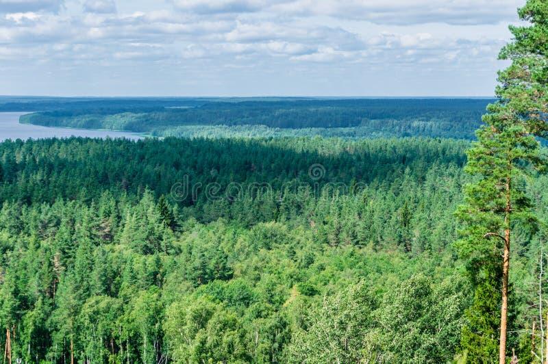 Luchtuitzicht van naaldhout en gemengd bos en verre rivier stock afbeelding