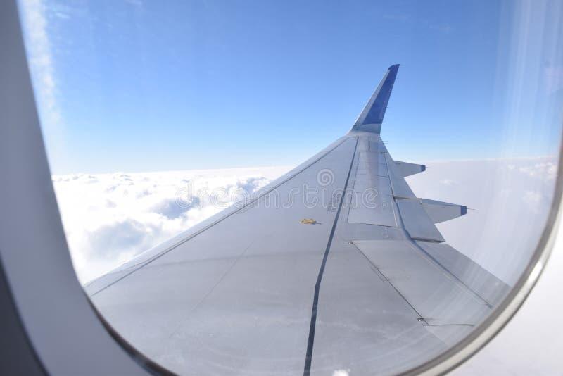 Luchtvleugels van Indigovlucht op moesson stock afbeeldingen