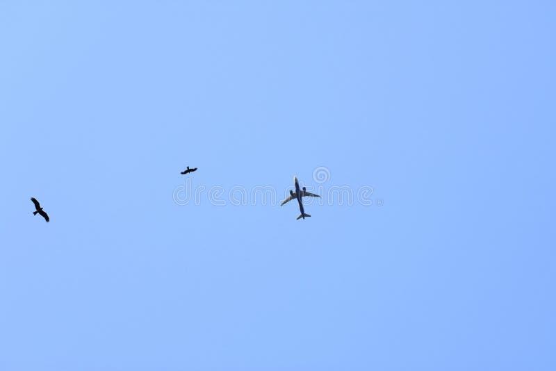 Luchtvliegtuig en vogels in de hemel royalty-vrije stock afbeeldingen