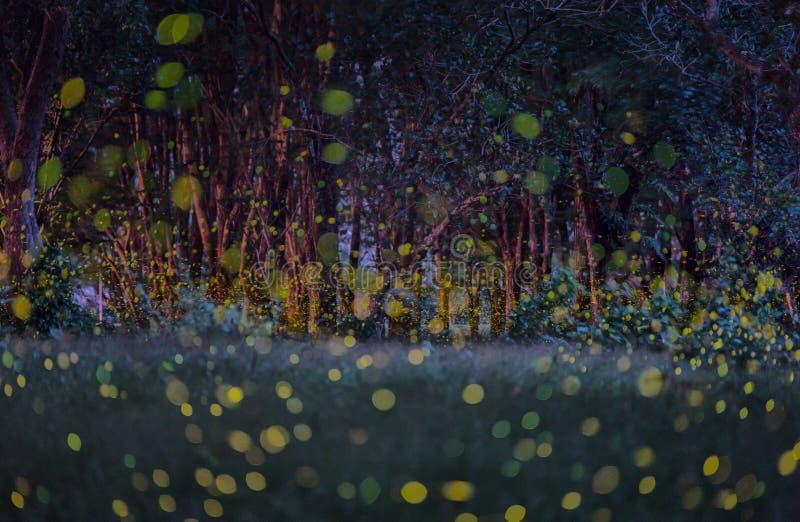 Luciérnagas en el verano en el bosque fotos de archivo