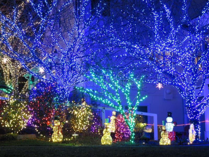 Luci blu di Natale sugli alberi fotografia stock libera da diritti