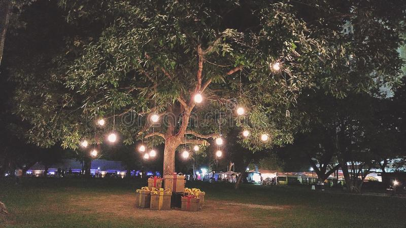 luci che appendono sull'albero verde della foglia fotografie stock libere da diritti