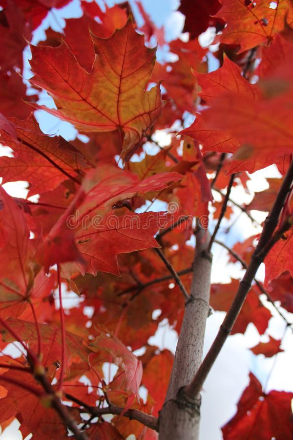 Luci dell'autunno fotografia stock libera da diritti