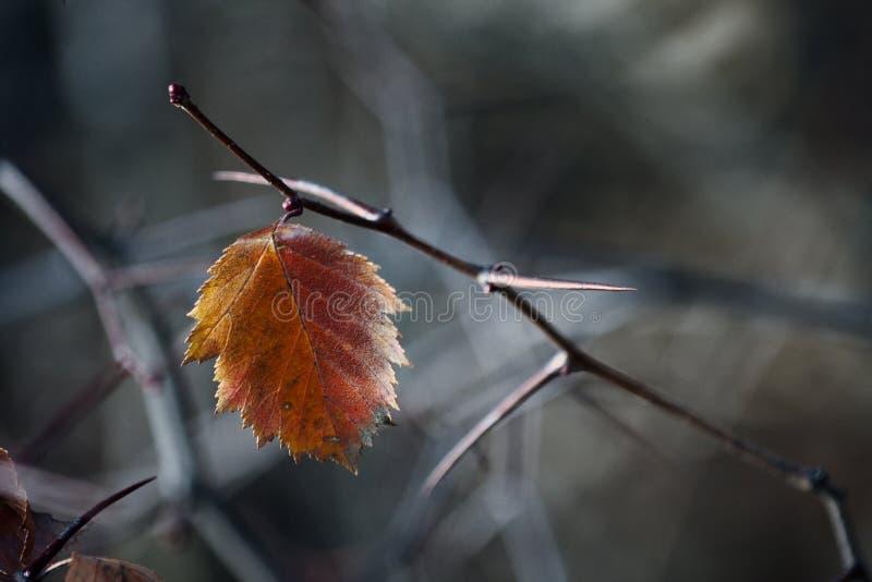 Luci dell'autunno immagine stock libera da diritti