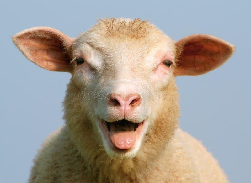 Luci le pecore
